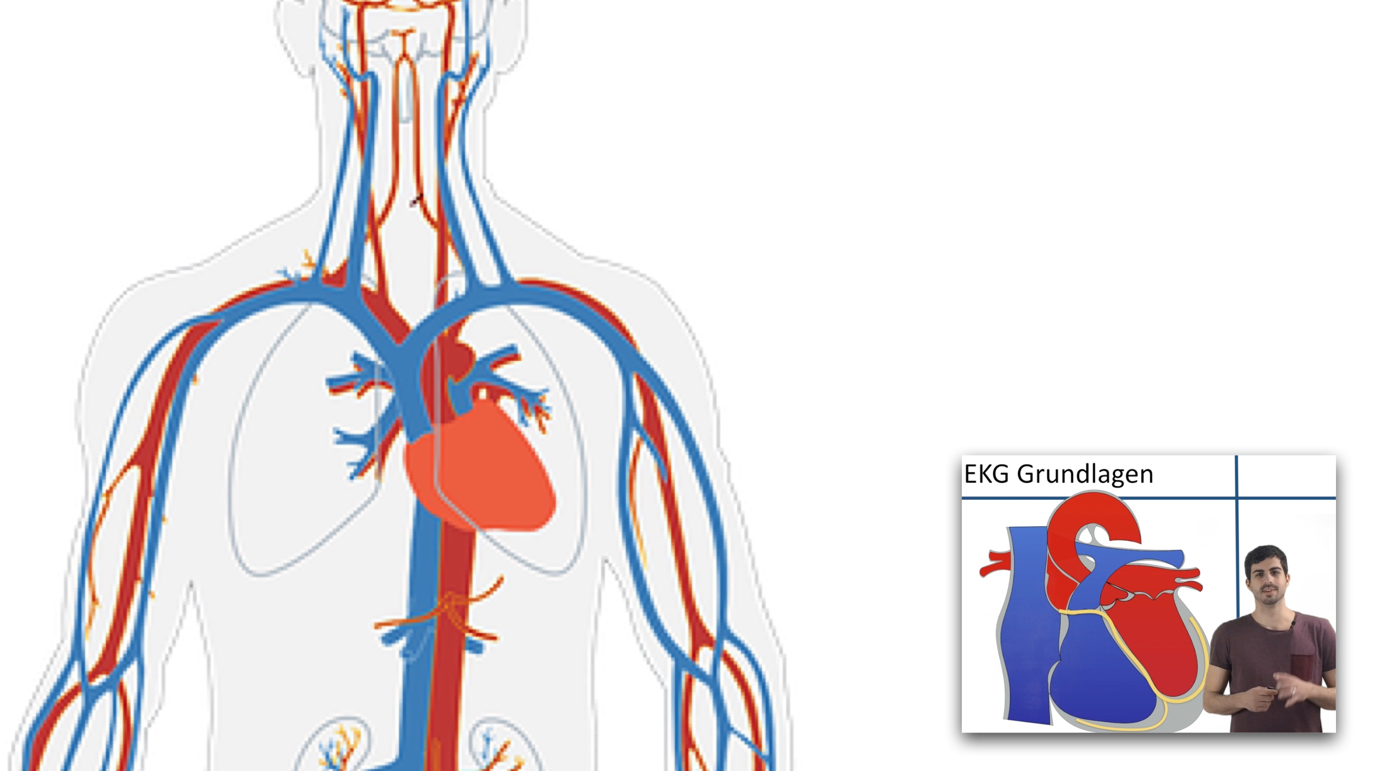EKG - Grundlagen Teil 2 - Clipdocs