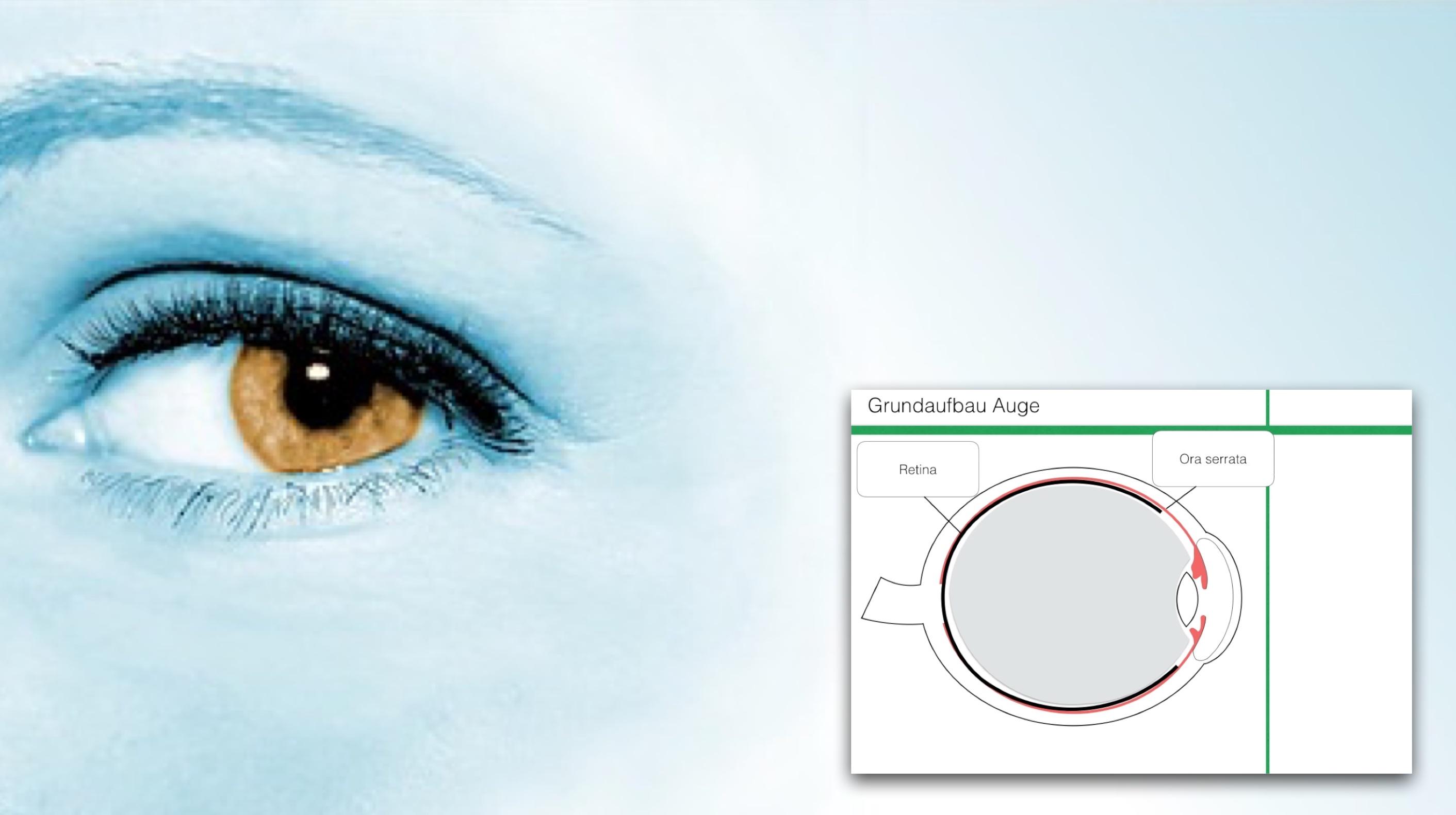 Grundaufbau des Auges - Clipdocs